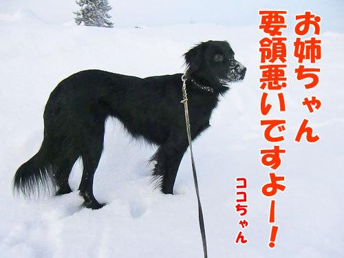 チャンスとティアラ+ココ-20130125-4-500.jpg