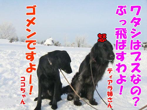 チャンスとティアラ+ココ-20130125-7-500.jpg