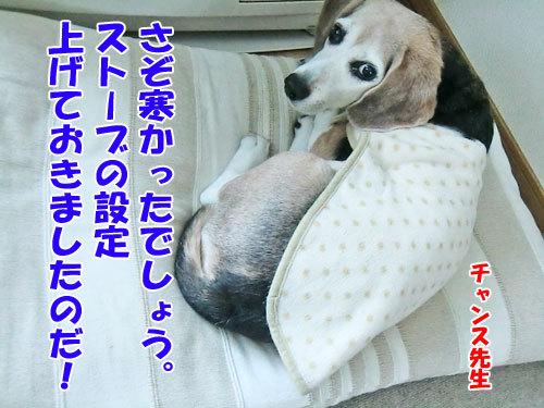 チャンスとティアラ+ココ-20130125-8-500.jpg