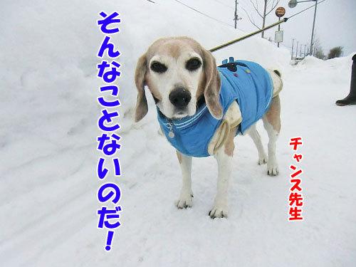 チャンスとティアラ+ココ-20130126-3-500.jpg