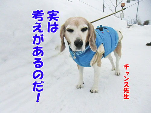 チャンスとティアラ+ココ-20130126-4-500.jpg