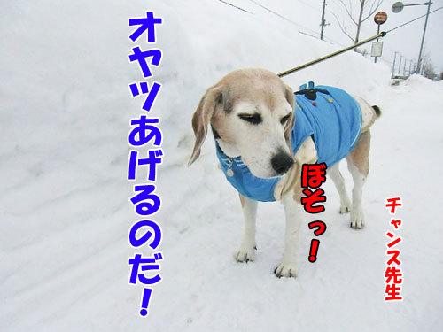チャンスとティアラ+ココ-20130126-5-500.jpg
