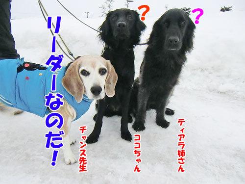 チャンスとティアラ+ココ-20130126-6-500.jpg