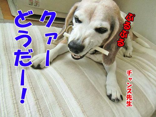 チャンスとティアラ+ココ-20130127-5-500.jpg