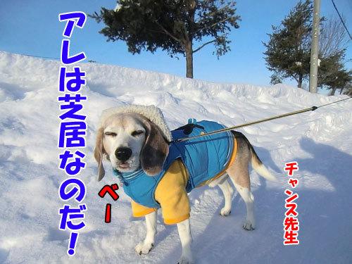 チャンスとティアラ+ココ-20130129-3-500.jpg