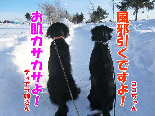 チャンスとティアラ+ココ-20130129-4-500.jpg