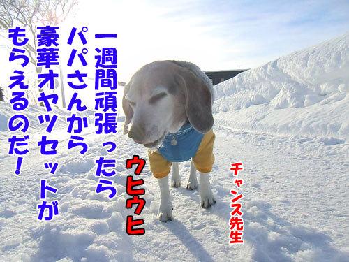 チャンスとティアラ+ココ-20130129-8-500.jpg