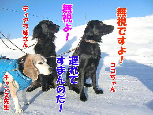 チャンスとティアラ+ココ-20130130-4-500.jpg