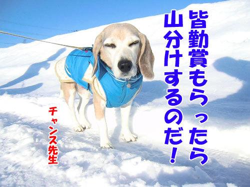 チャンスとティアラ+ココ-20130130-5-500.jpg