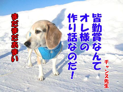 チャンスとティアラ+ココ-20130130-9-500.jpg