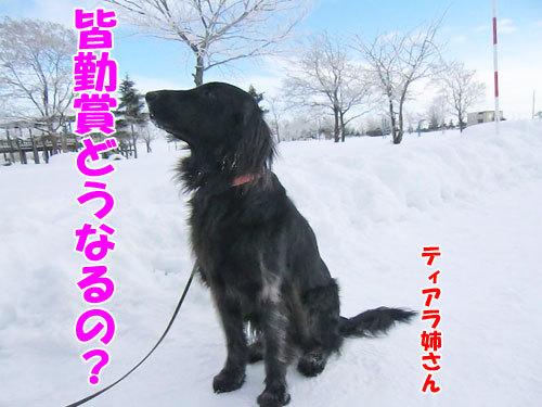 チャンスとティアラ+ココ-20130131-8-500.jpg