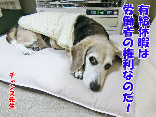 チャンスとティアラ+ココ-20130131-9-500.jpg