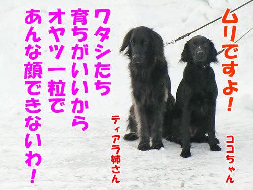 チャンスとティアラ+ココ-20130201-11-500.jpg