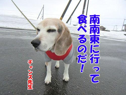 チャンスとティアラ+ココ-20130203-2-500.jpg