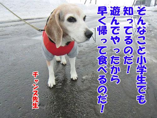 チャンスとティアラ+ココ-20130203-7-500.jpg
