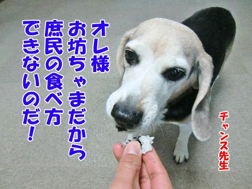 チャンスとティアラ+ココ-20130204-8-500.jpg