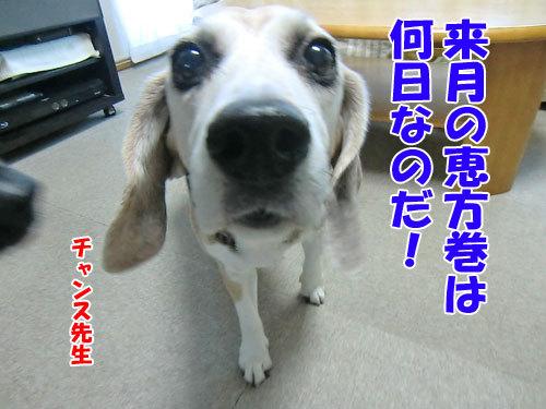チャンスとティアラ+ココ-20130204-12-500.jpg