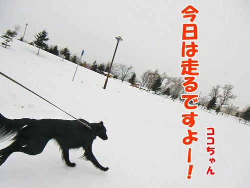 チャンスとティアラ+ココ-20130205-2-500.jpg