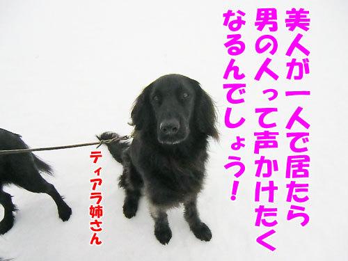 チャンスとティアラ+ココ-20130205-3-500.jpg