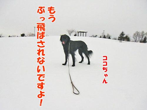 チャンスとティアラ+ココ-20130205-8-500.jpg