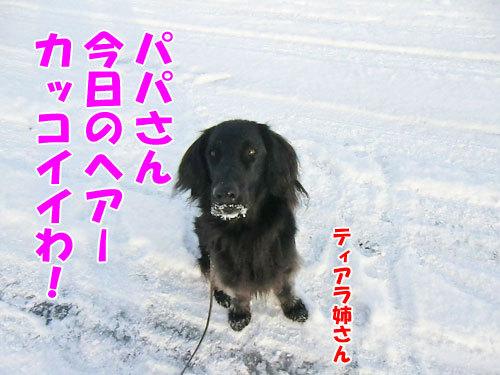 チャンスとティアラ+ココ-20130207-4-500.jpg
