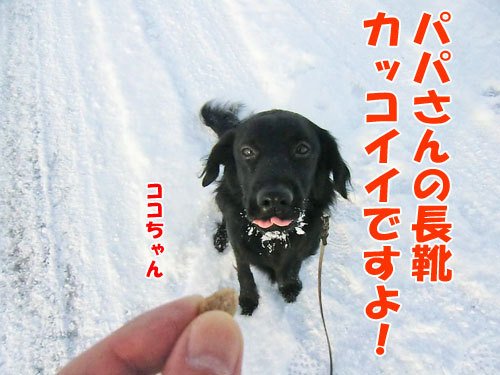 チャンスとティアラ+ココ-20130207-5-500.jpg