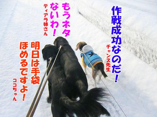 チャンスとティアラ+ココ-20130207-9-500.jpg
