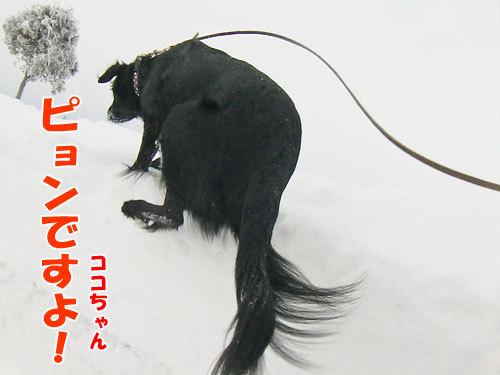 チャンスとティアラ+ココ-20130208-2-500.jpg