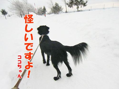 チャンスとティアラ+ココ-20130208-7-500.jpg