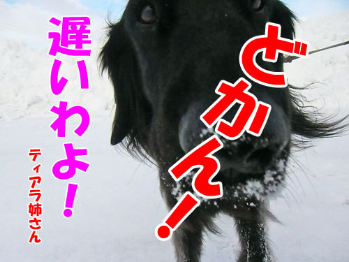 チャンスとティアラ+ココ-20130210-5-500.jpg