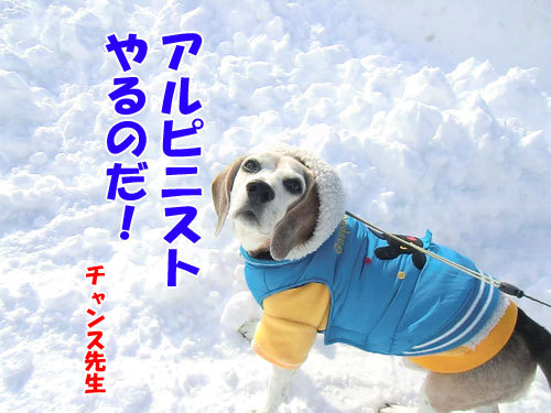 チャンスとティアラ+ココ-20130210-8-500.jpg