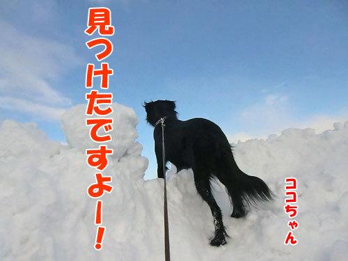チャンスとティアラ+ココ-20120211-1-500.jpg
