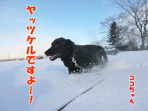 チャンスとティアラ+ココ-20120211-3-500.jpg