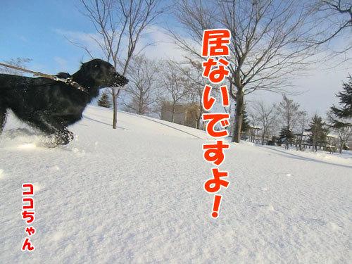 チャンスとティアラ+ココ-20120211-4-500.jpg