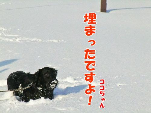 チャンスとティアラ+ココ-20120211-5-500.jpg
