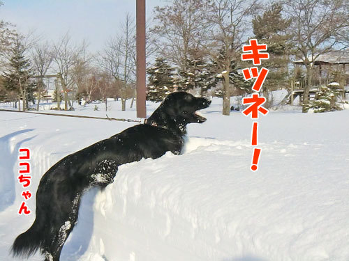 チャンスとティアラ+ココ-20120211-6-500.jpg