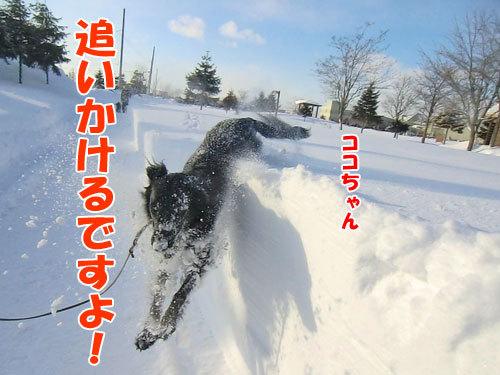 チャンスとティアラ+ココ-20120211-8-500.jpg
