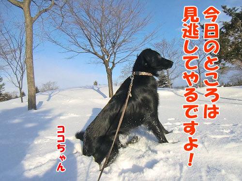 チャンスとティアラ+ココ-20120211-9-500.jpg