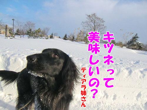 チャンスとティアラ+ココ-20120211-10-500.jpg