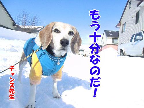 チャンスとティアラ+ココ-20120211-11-500.jpg