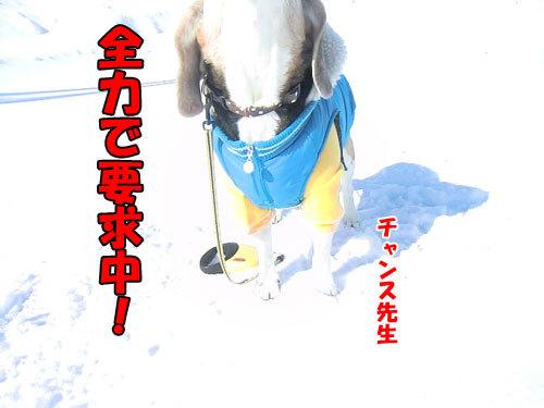 チャンスとティアラ+ココ-20120211-13-500.jpg