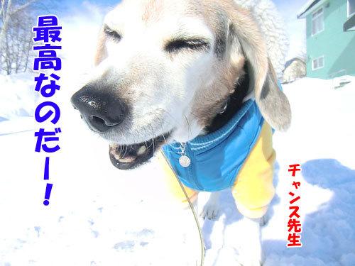 チャンスとティアラ+ココ-20120211-14-500.jpg