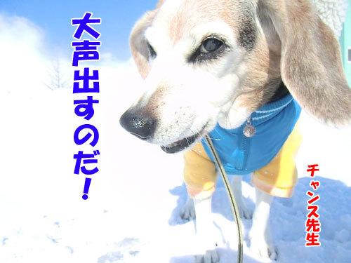 チャンスとティアラ+ココ-20120211-15-500.jpg
