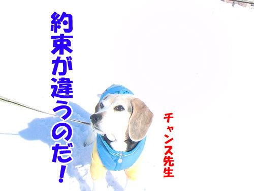 チャンスとティアラ+ココ-20120211-16-500.jpg