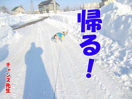 チャンスとティアラ+ココ-20130213-4-500.jpg