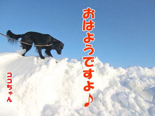 チャンスとティアラ+ココ-20130214-2-500.jpg