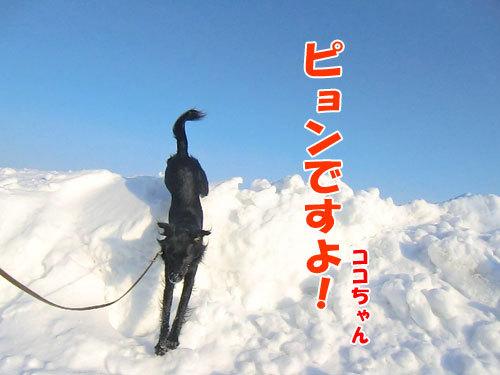 チャンスとティアラ+ココ-20130214-4-500.jpg