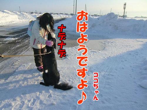 チャンスとティアラ+ココ-20130214-5-500.jpg