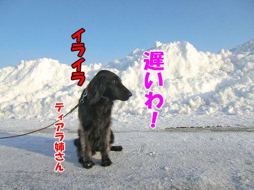 チャンスとティアラ+ココ-20130214-6-500.jpg