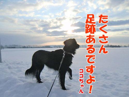 チャンスとティアラ+ココ-20130215-2-500.jpg